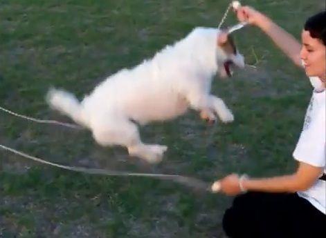 多芸な犬07
