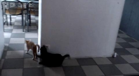猫が猫を待ち伏せ だけど05