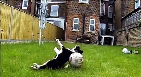 子犬 ボールにアタック・・・07