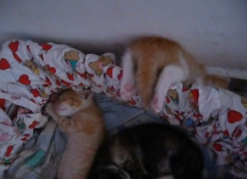 子猫 寝相が悪すぎ04