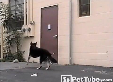 犬 犬のためにドアを開けてあげる犬02