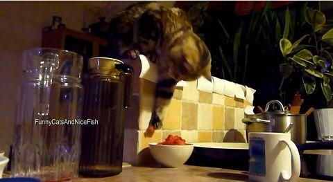 猫 上から餌を取る04