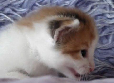 子猫 2匹で会話06