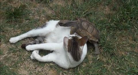 猫 亀にマッサージ02