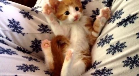 子猫 一人遊び03