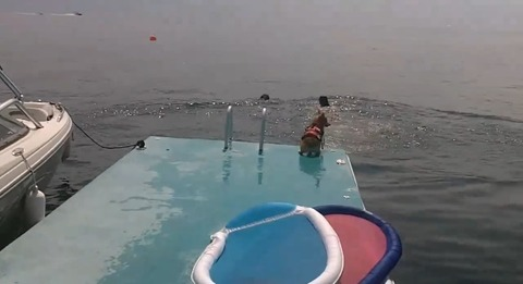 犬 コーギージャンプ01