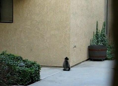 猫 壁をよじ登る04