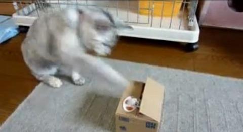 猫 いたずらBANKにねこパンチ01