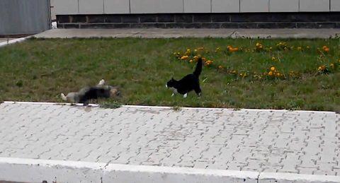 犬猫 ゆっくり近付き、喧嘩!でも犬が05
