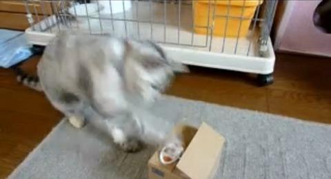 猫 いたずらBANKにねこパンチ04