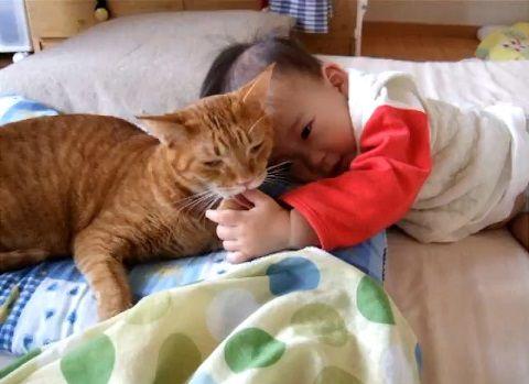 猫 赤ちゃんをペロペロ00