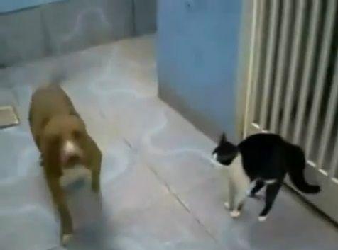 犬猫 sith 02