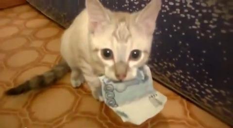 子猫 お金咥え01