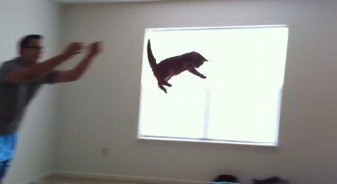 猫 投げてもらって着地の繰り返し01