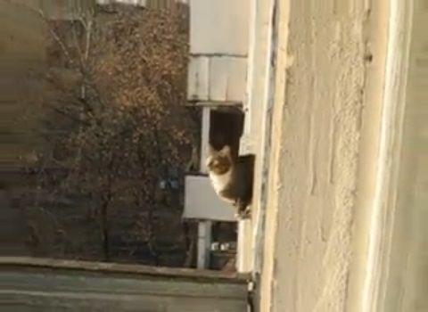猫 三角飛び01