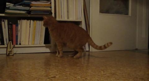 猫 メトロノーム03