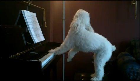 犬 piano 弾語り07