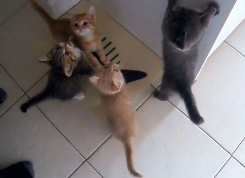 子猫 餌に群がる05