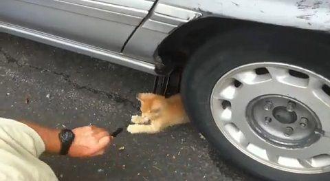 子猫 ジャッキ上げ手伝い00