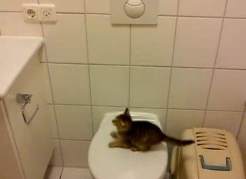 子猫 便座からジャンプ・・・01