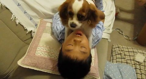 犬 子供とおしゃべりキャバリア00