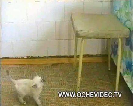 子猫 チキンを丸ごとかっぱらい00