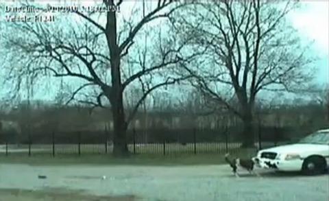 犬 パトカーのバンパー破壊00