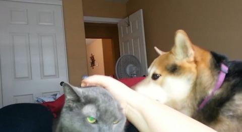 犬猫 私を撫でてよ01