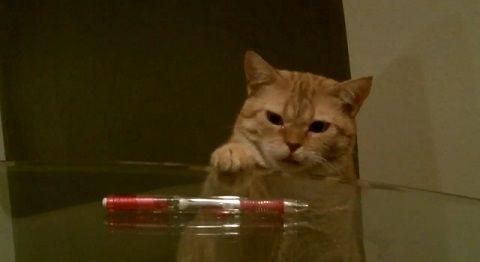 猫 ペンを机から落とす05