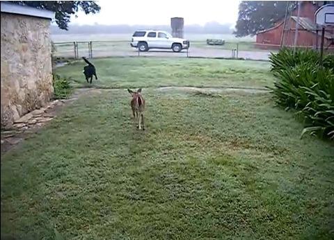 犬 鹿と遊ぶ02
