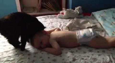 猫 赤ちゃんにスリスリ02
