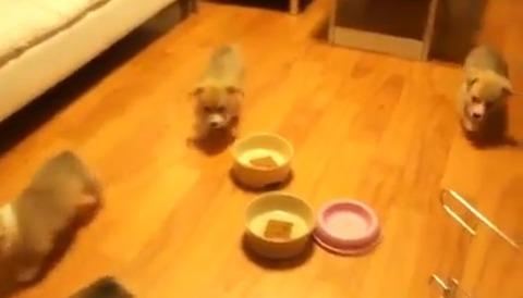 子犬 チリンチリン06