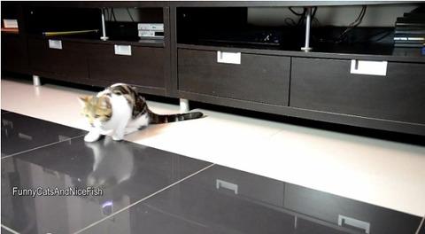 猫 家具の下まで01