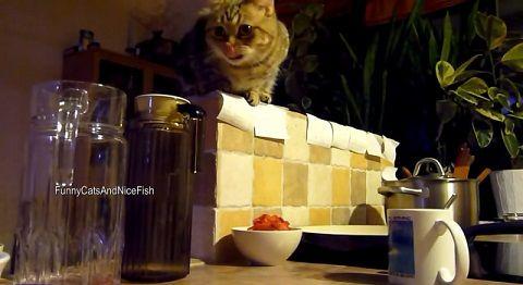 猫 上から餌を取る03
