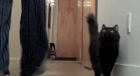 猫 今の風船?01