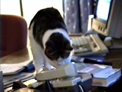猫 電話に出ない06