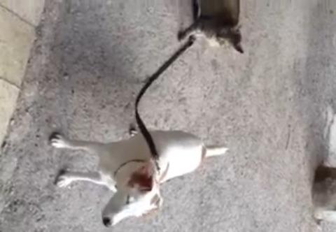 猫が犬をリードで00
