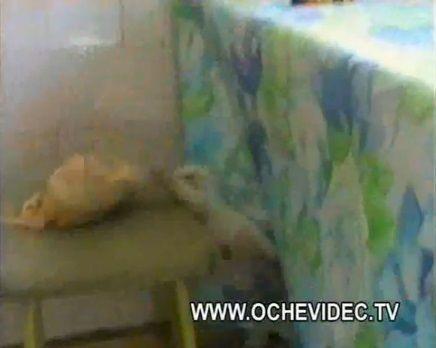 子猫 チキンを丸ごとかっぱらい05