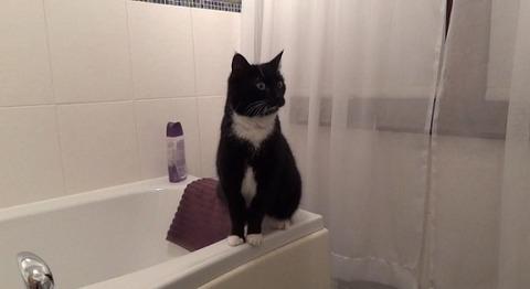 猫 洗面台の鏡に00
