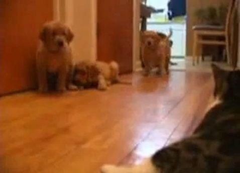 犬猫 複数子犬vs猫04
