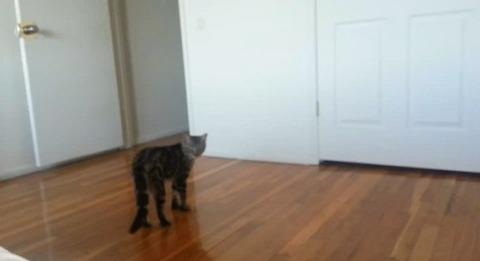 猫 直立歩き00