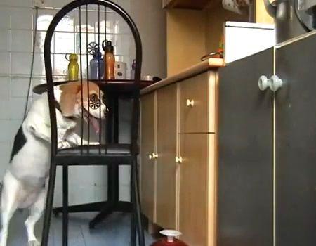 犬 椅子を使ったつまみ食い02