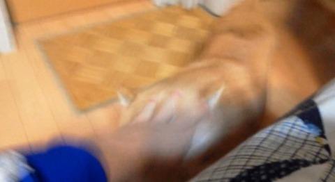 柴犬 ひょっこり06