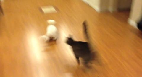 犬猫 その2 07