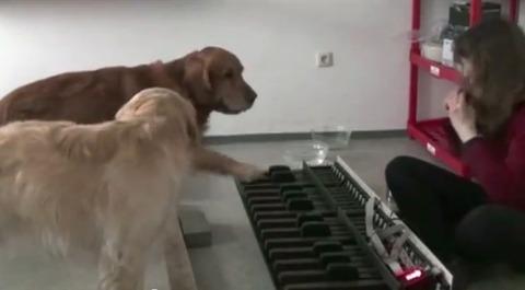 犬 piano 03