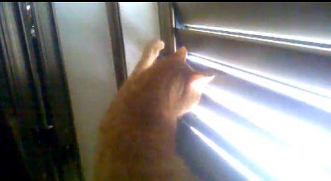 猫 ブラインド開け閉め対決02