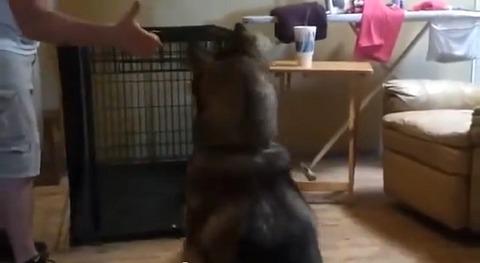 犬 バーン!うおー02