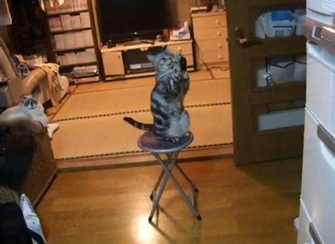猫 冷蔵庫前で拝み続ける05