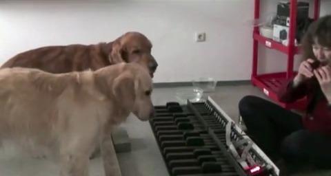 犬 piano 00