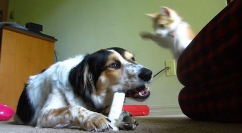 犬猫 いいかげん骨を食わせろ02